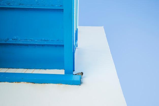 Vista inferiore uccellino sul balcone Foto Gratuite