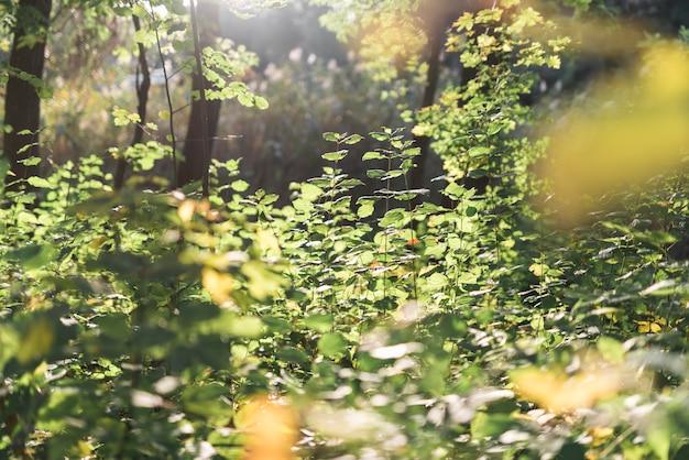 Vista panoramica nella foresta Foto Gratuite