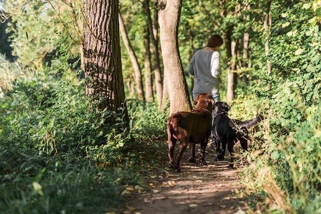 Vista posteriore di una donna che cammina con i suoi due labrador in pista alla foresta Foto Gratuite