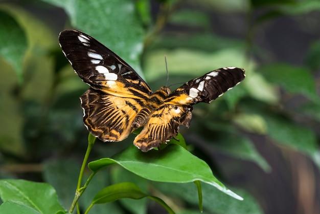 Vista posteriore farfalla su foglia Foto Gratuite