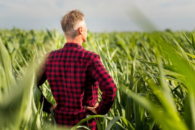 Vista posteriore uomo che guarda lontano in un campo Foto Gratuite