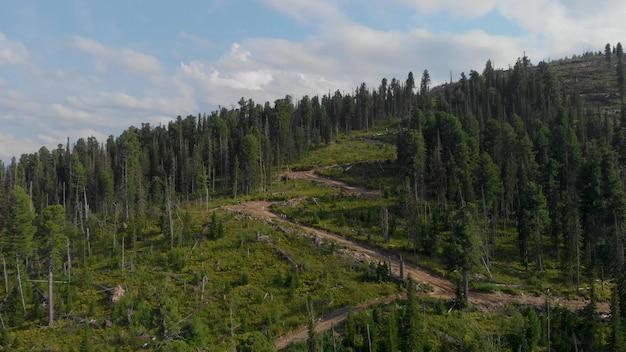 Vista sulla foresta abbattuta Foto Premium