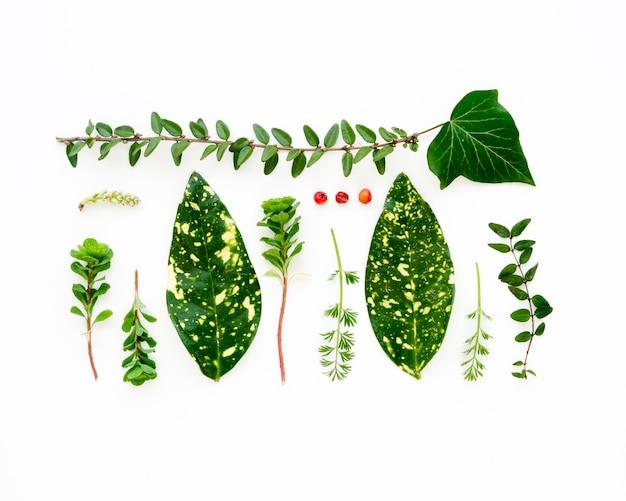 Vista superiore del concetto verde delle foglie con lo spazio della copia Foto Gratuite