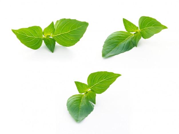 Vista superiore dell'alimento dell'ingrediente delle foglie del basilico su bianco Foto Premium
