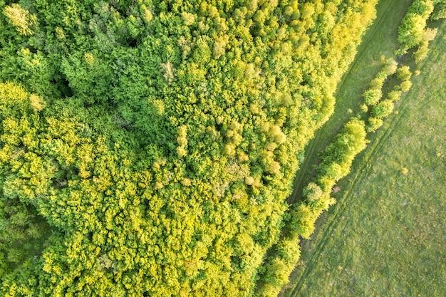 Vista superiore della foresta verde il giorno di molla soleggiato Foto Premium