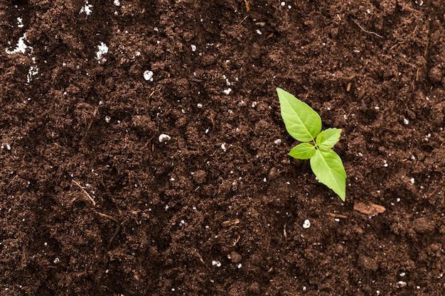 Vista superiore della superficie della pianta verde della piantina strutturata Foto Premium