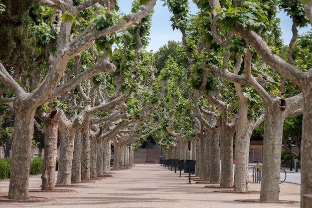 Viste dal bellissimo parco della cittadella (parc de la ciutadella) situato a barcellona, in spagna. Foto Premium