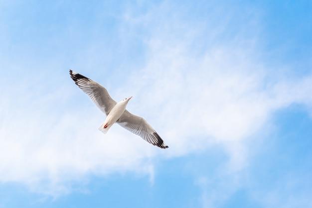 Volo del gabbiano sul cielo blu Foto Premium