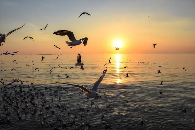 Volo e oceano del gabbiano nel tramonto, paesaggio, luce calda Foto Premium