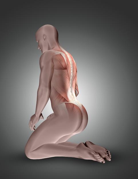 3d, ajoelhando-se, figura masculina, com, costas, músculos, destacado Foto gratuita