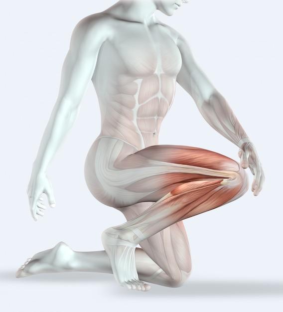 3d rendem de uma figura masculina segurando o joelho na dor com o mapa muscular Foto gratuita