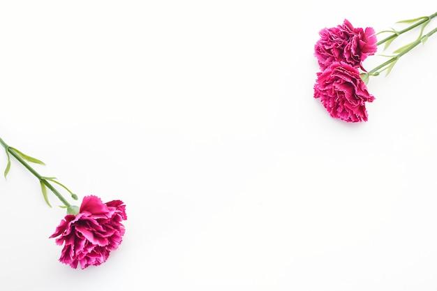 8 de março carnation dia das mulheres Foto Premium