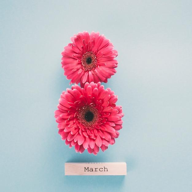 8 de março inscrição feita de flores gerbera Foto gratuita