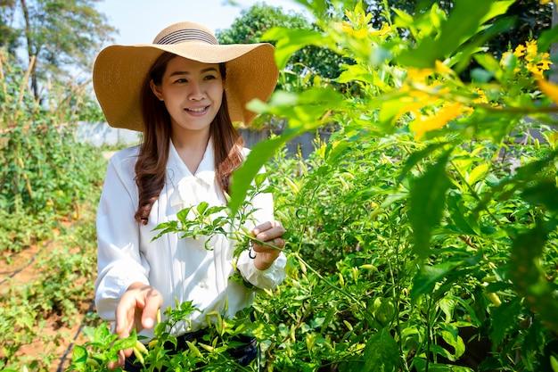 A agricultora asiática está cuidando de sua horta orgânica e mantendo legumes frescos para sua casa. Foto Premium
