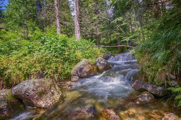 A água do córrego do rio da floresta flui lentamente através das pedras na floresta. Foto Premium