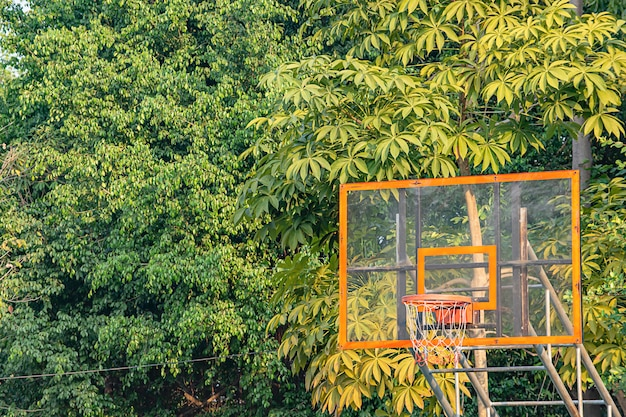 A árvore do fundo da aro de basquetebol e aquela reflete a luz solar na manhã. Foto Premium