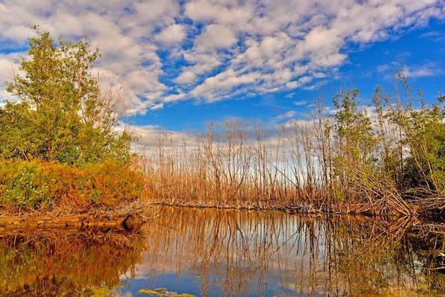 A árvore seca reflete a água no pântano sob o céu azul e a nuvem branca na véspera. Foto Premium