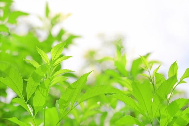 A árvore verde fresca da natureza sae no fundo borrado na luz solar da manhã. fundo natural com espaço de cópia. Foto Premium