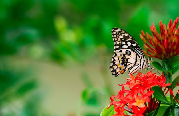 A borboleta colorida que suga o néctar do ponto floresce com fundo verde fresco. Foto Premium