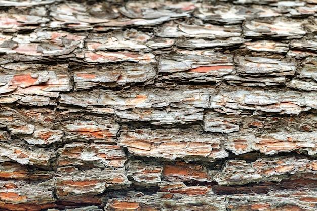 A casca da velha árvore. Foto Premium
