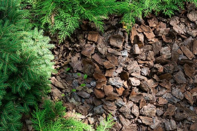 A colina alpina de coníferas e arbustos é coberta de casca. Foto Premium