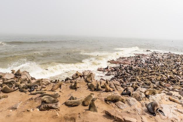 A colônia de focas na cape cross, na costa atlântica da namíbia, áfrica. Foto Premium