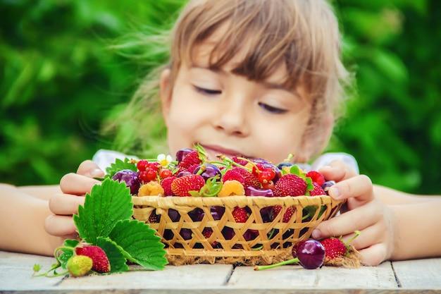 A criança está colhendo cerejas no jardim. foco seletivo. Foto Premium
