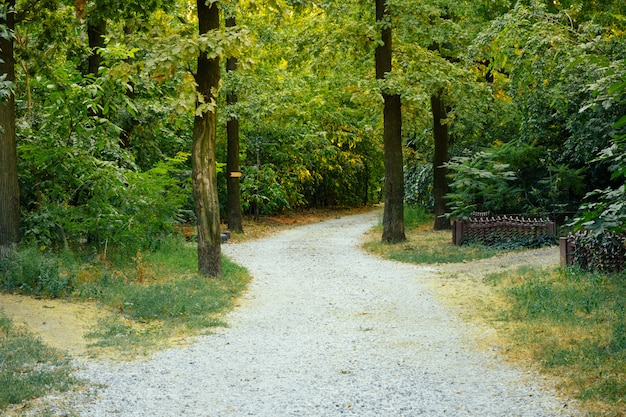 A estrada de acesso de cascalho nas árvores em um dia ensolarado de verão Foto Premium