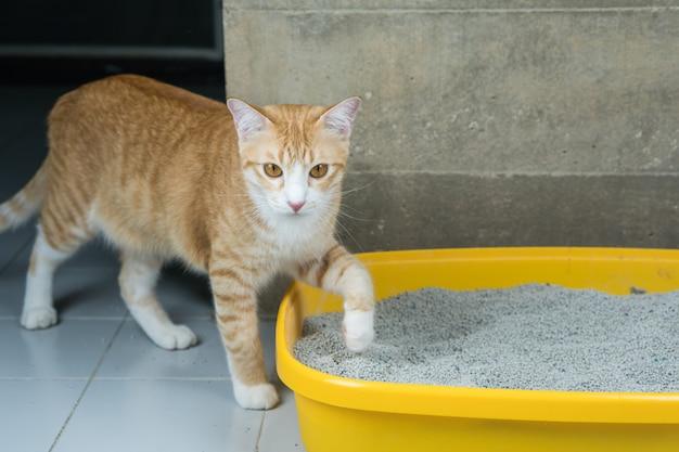 A excreção de gatos é rotina diária. Foto Premium