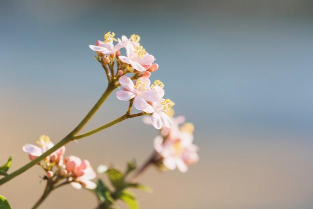 A flor cor-de-rosa no espaço borrado do fundo e da cópia para introduz seu texto. Foto Premium