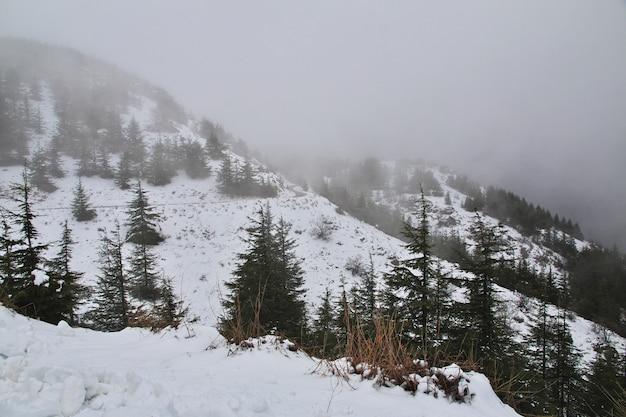 A floresta de cedro nas montanhas do líbano Foto Premium
