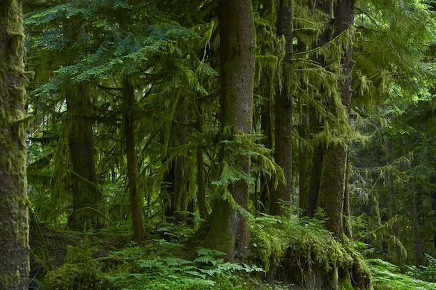 A floresta Foto gratuita