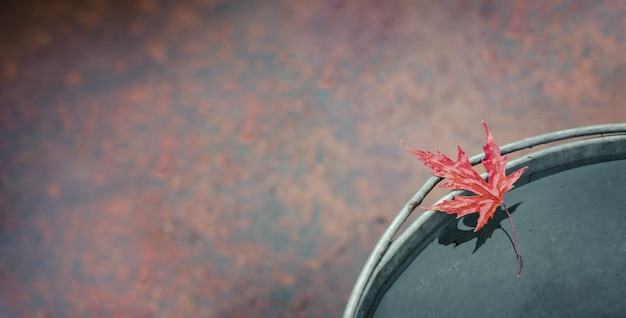 A folha de bordo vermelha molhada encontra-se na borda da cubeta da lata. Foto Premium