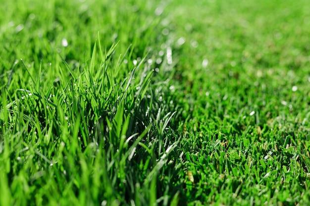 A grama verde fresca cortou parcialmente o gramado. diferença entre grama perfeitamente cortada e aparada ou grama longa não cortada. Foto Premium
