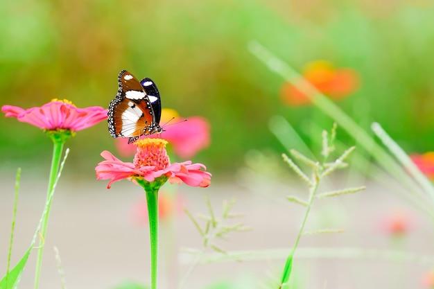 A linda borboleta sobre as flores no jardim. Foto Premium