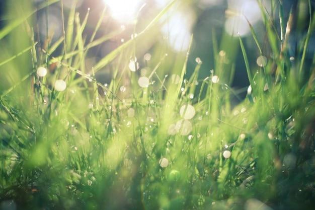 A luz solar através da grama Foto gratuita