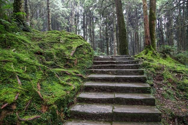A maneira da caminhada na área do parque nacional de alishan em taiwan. Foto Premium