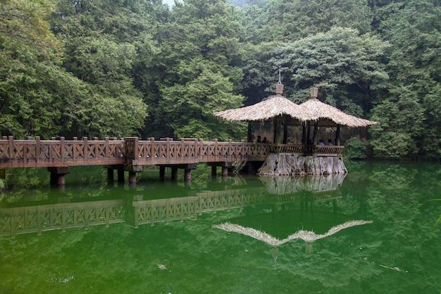 A maneira da caminhada vai ao pavilhão na área do parque nacional de alishan em taiwan. Foto Premium