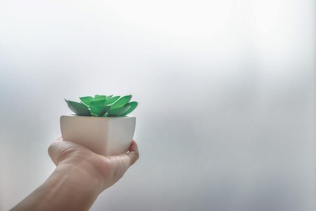 A mão de um homem de cacto em um pote quadrado branco Foto Premium