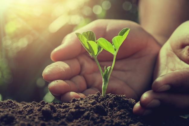A mão protege a árvore pequena com a luz solar na natureza. conceito de agricultura Foto Premium