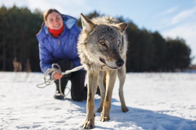 A menina está empenhada em treinar um lobo cinzento em um campo nevado e ensolarado. Foto Premium