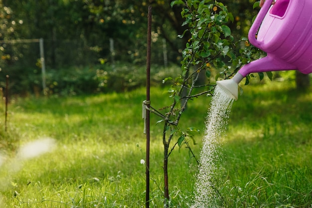 A menina está molhando uma macieira violeta em um jardim verde Foto Premium