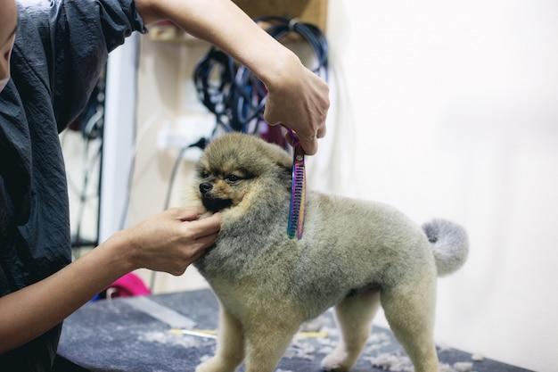 A mulher está cortando o cabelo um cão Foto Premium