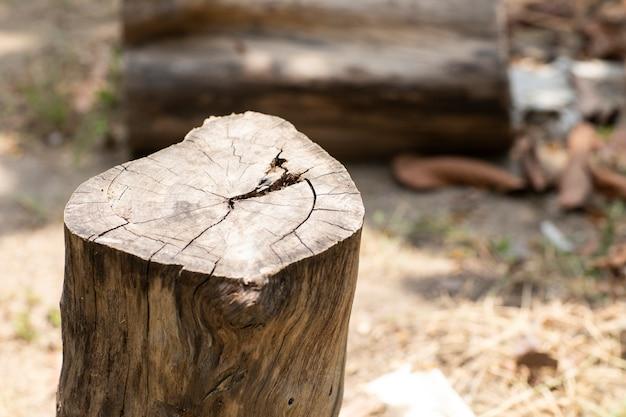 A natureza do corte da árvore é destruída Foto Premium