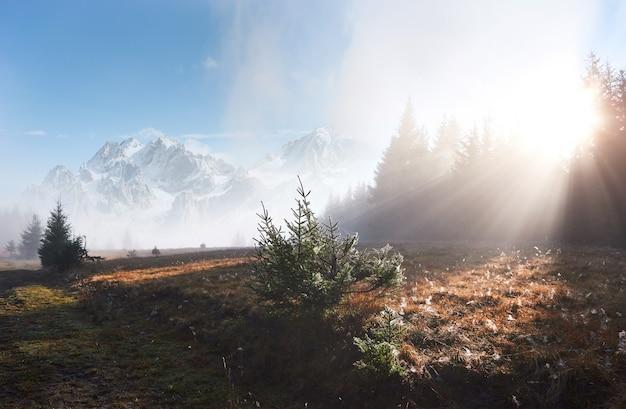 A névoa da manhã rasteja com restos sobre a floresta de montanha de outono coberta de folhas de ouro. picos nevados de montanhas majestosas ao fundo Foto gratuita
