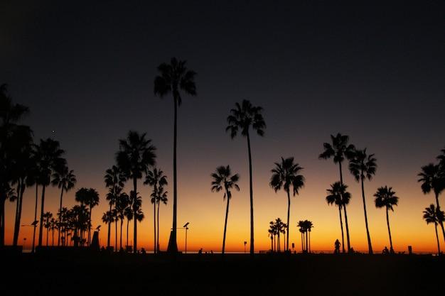 A noite paira sobre palmeiras altas na costa do oceano Foto gratuita