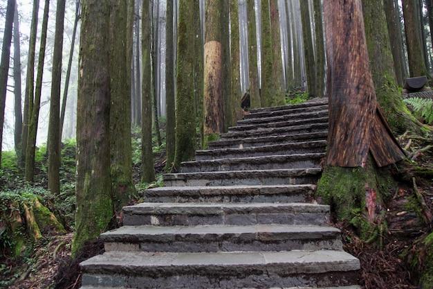 A passagem da madeira na floresta de alishan no parque nacional de alishan, formosa Foto Premium