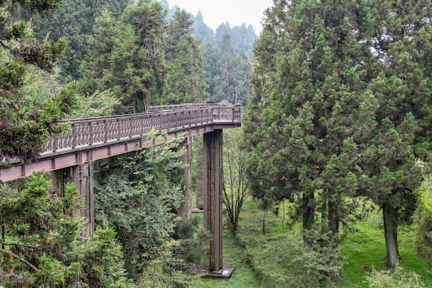 A passagem de madeira do céu no parque nacional alishan em formosa. Foto Premium