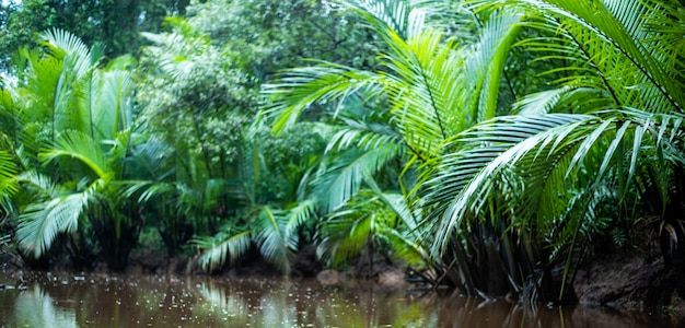 A pequena amazônia em pang-nga em sang nae canal tailândia Foto Premium
