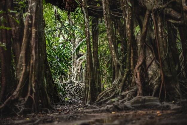 A pequena amazônia em pangnga em sang nae canal tailândia Foto Premium